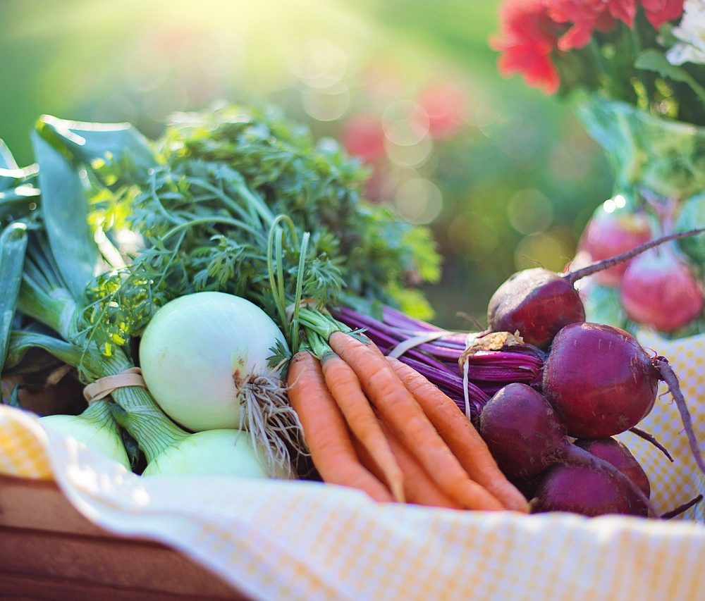 10 Fun to Grow Vegetables for Beginner Gardeners