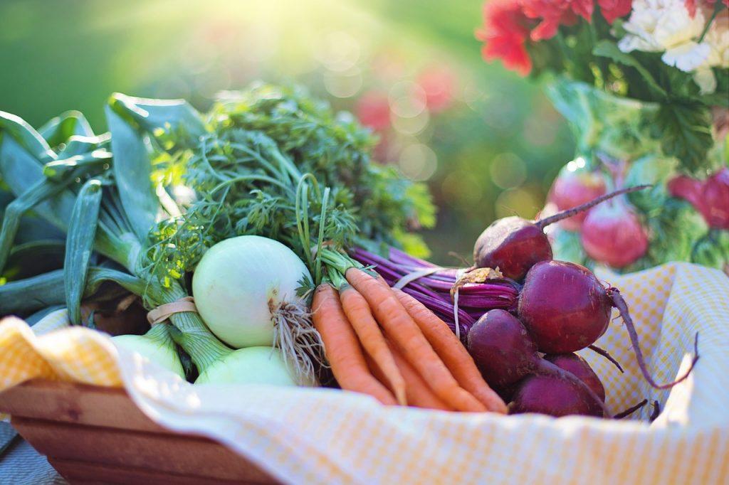 basket of freshly picked vegetables