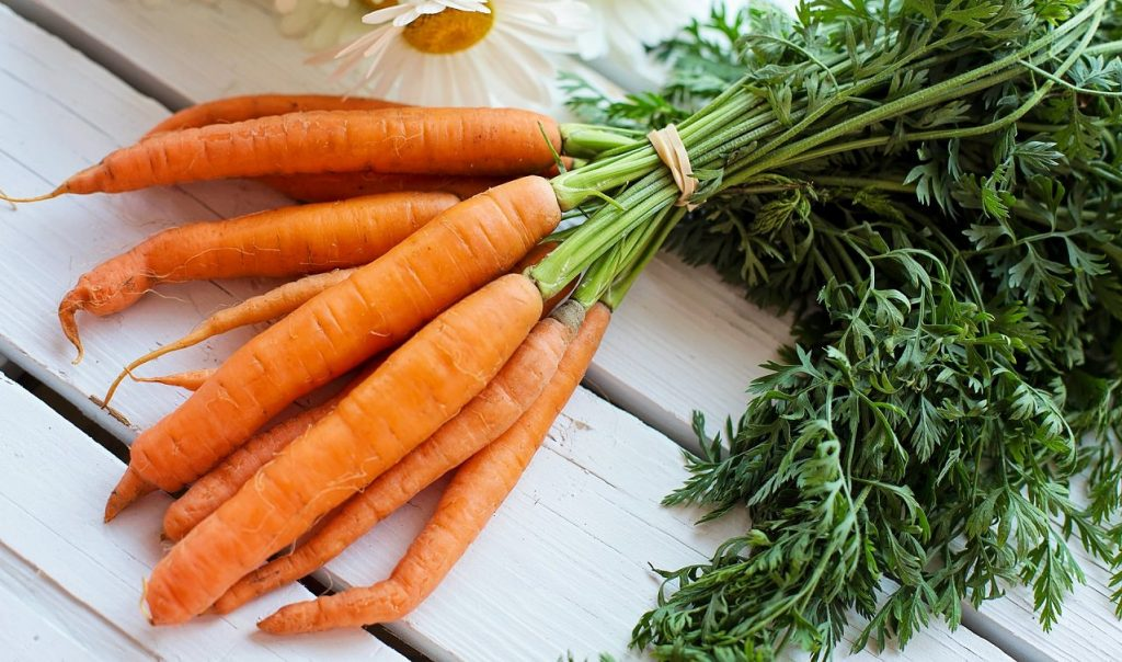 Bunch of fresh carrots with tops