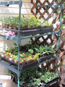 Seedlings growing on the deck