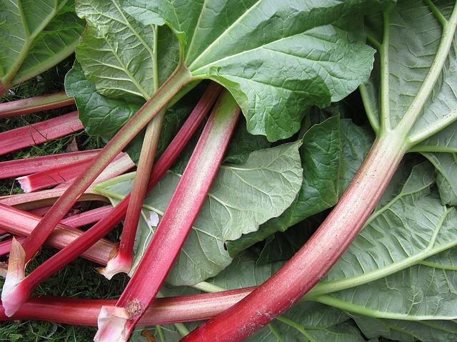 bright red rhubarb stems