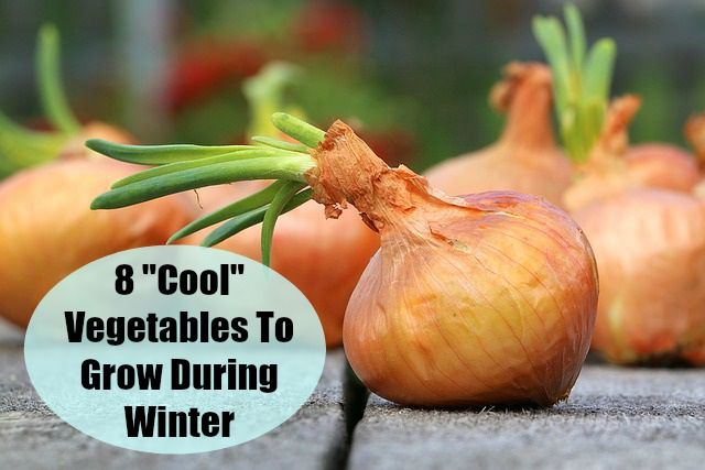 Can You Really Grow A Vegetable Garden in Winter? Try These 8 Winter Garden Crops